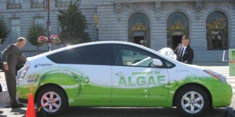 algaeus-prius-na-alge