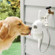 pes-napajanje-voda