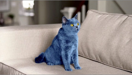 smarties-blue-cat