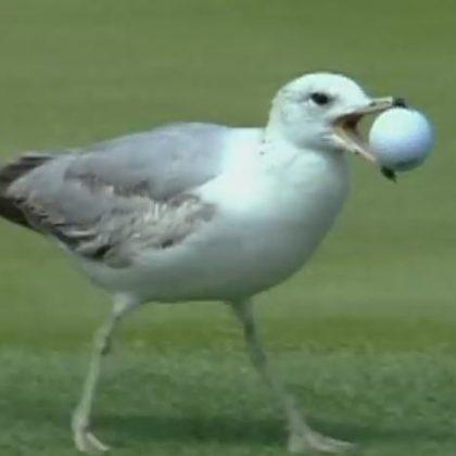 golf-prigode