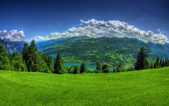 green_nature