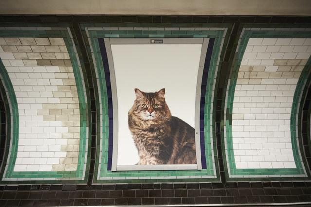 macke-london-podzemna-catsnotads