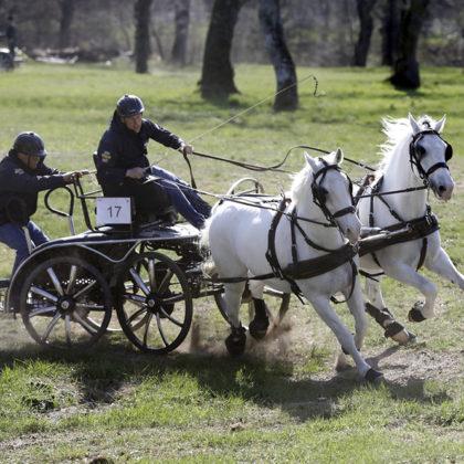 kobilarna-lipica-Miha-Tavcar