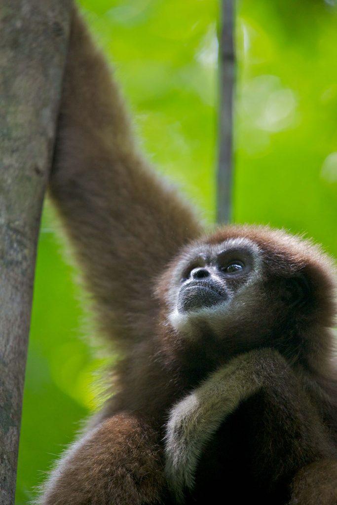 Monkeys Revealed