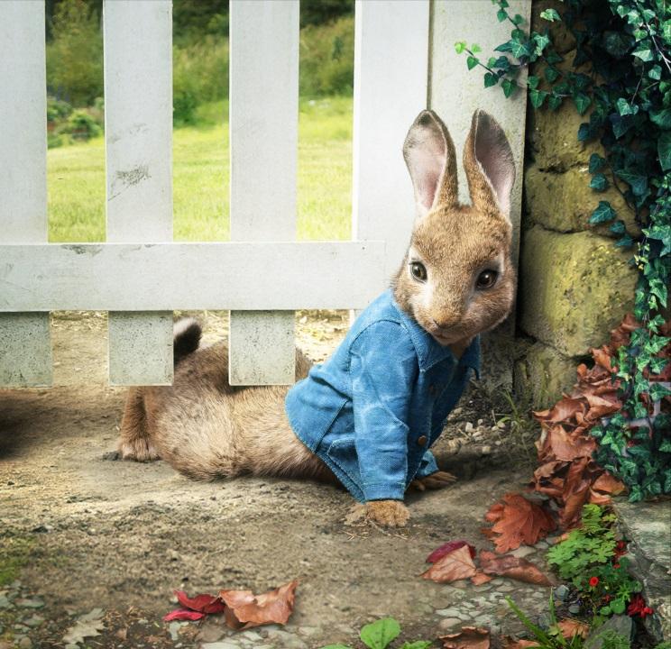Peter zajec-Peter Rabbit-10