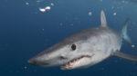 shark-week-discovery-chanel-2019-teden-morskih-psov-1