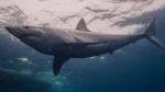 shark-week-discovery-chanel-2019-teden-morskih-psov-4