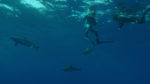 shark-week-discovery-chanel-2019-teden-morskih-psov-5